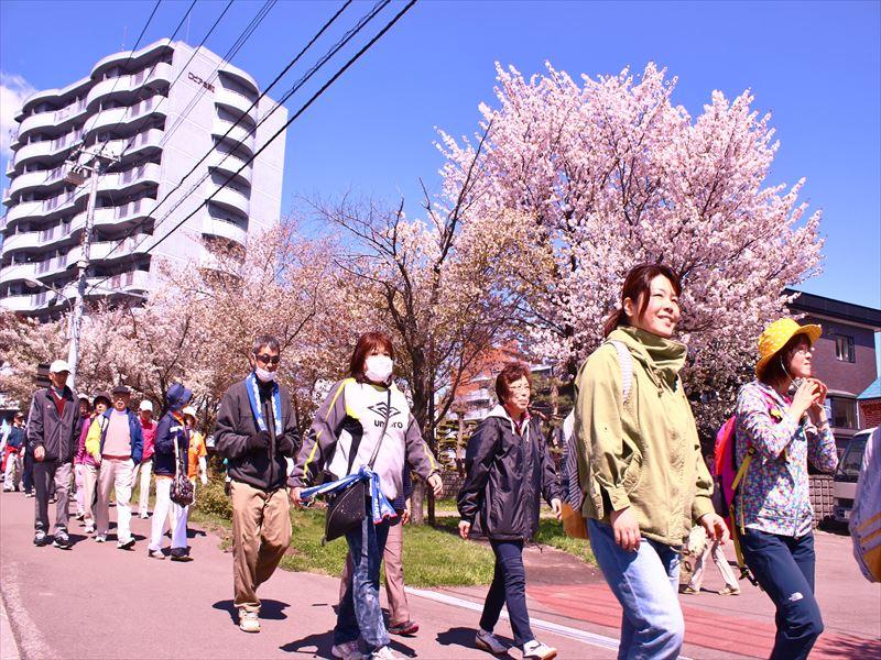 桜を見ながらウオーキング