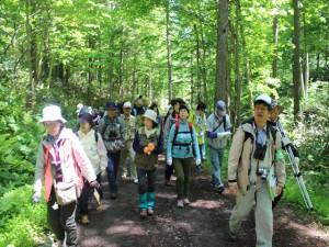 森林浴をしながらの山歩き