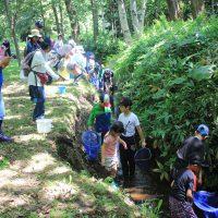 小川に入って、ドジョウやエビを捕まえる子供たち=平岡公園