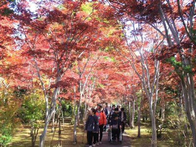 紅葉が始まった樹芸センター=10月19日