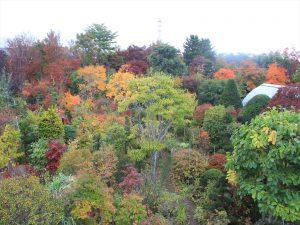 竹沢花木園ミニ展望台から見た紅葉