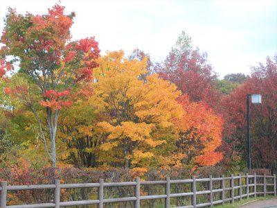 平岡公園も秋色に