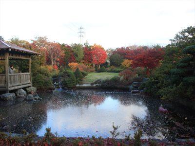 深まる秋の日本庭園